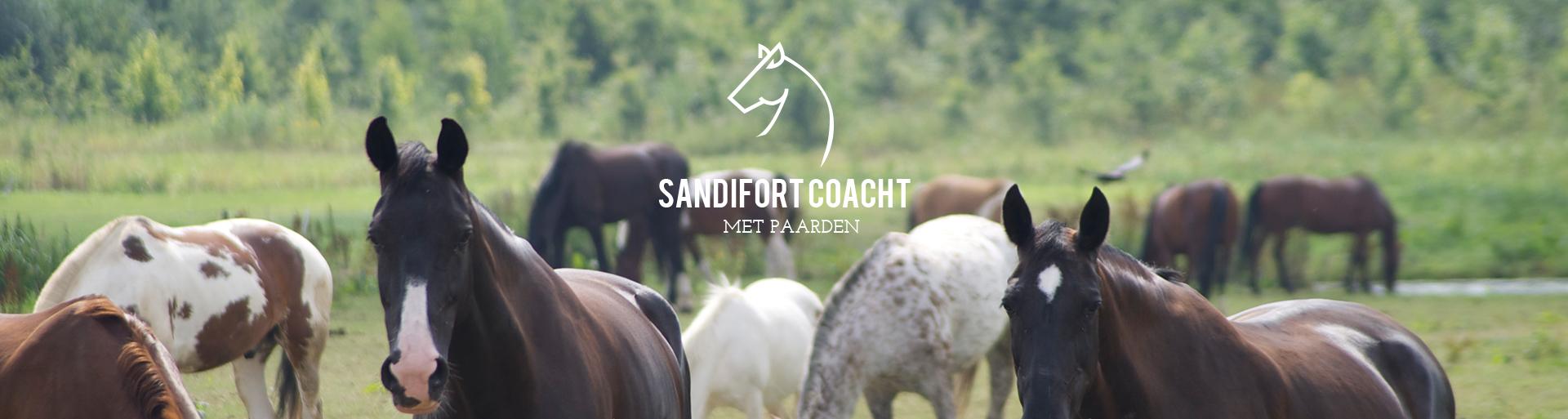 Sandifort coacht met paarden