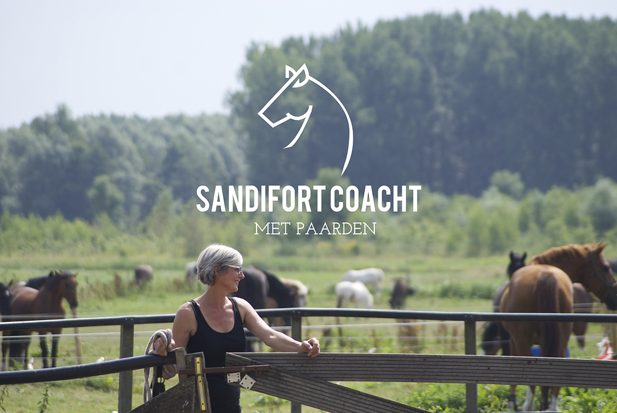 foto sandifort coacht met paarden